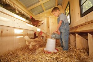 caring for chickens in nd