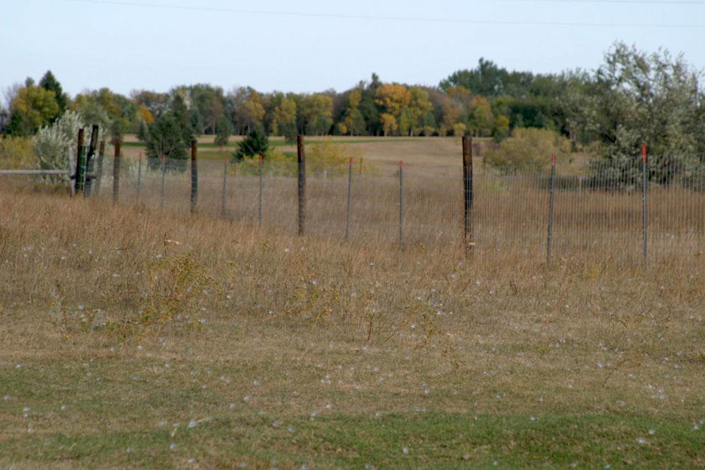 Horse farm near the cheyenne river