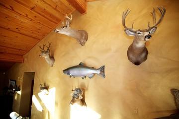 Custom hunting cabin